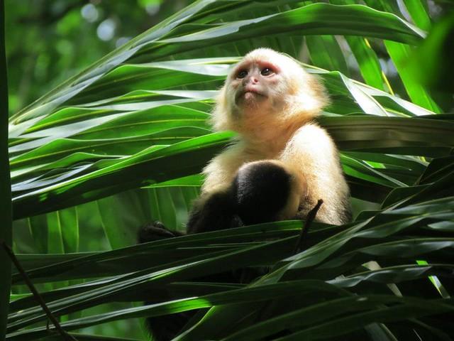 Costa Rica Big Cats Primates Turtles  Days