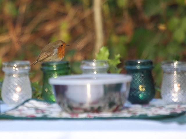 DSC_5203 Cheeky Robin