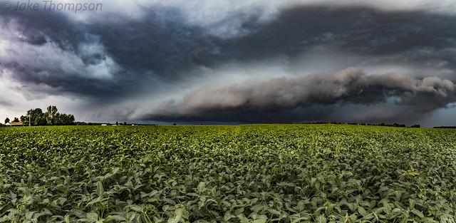 Storm & Beans