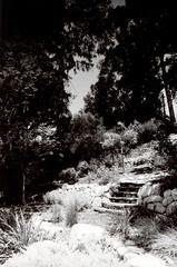 Porst SP Original Busch Gardens 4