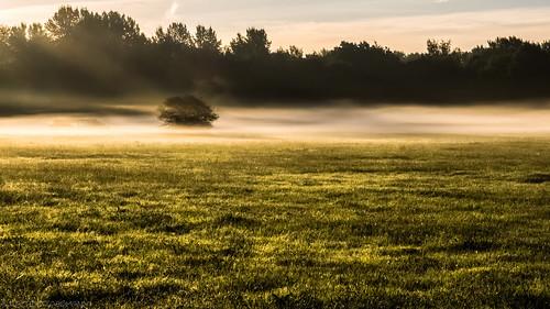 hannover morgennebel frühnebel scenicroute fog early beforework aufmwegzurarbeit ricklingen landscape sunrise ricklingermasch