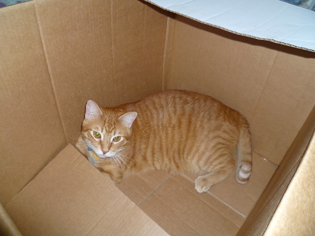 buster in a box