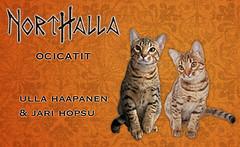 http://www.northalla.fi/