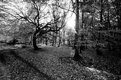 Ashridge Walk