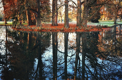 reflections pond