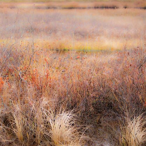 Petites et grandes broussailles... jolies couleurs... marais d'automne...!!!