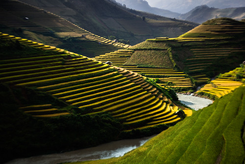 Golden rice terraces in Mu Cang Chai, Yen Bai, Vietnam