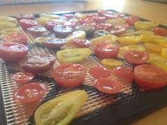 Two Days of Tomato Drying by mikeysklar