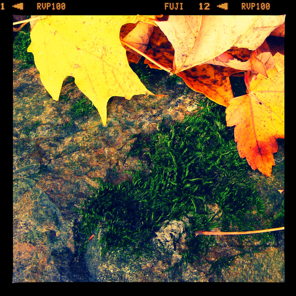 dead leaves and  moss  on rocks