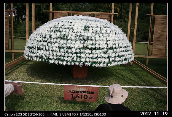 20121119_Flower8