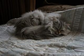 Fat Cat -Nex5N