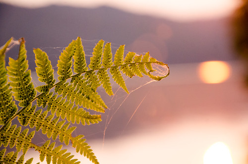 camping sunlight fern nature oregon sunrise unitedstates odelllake