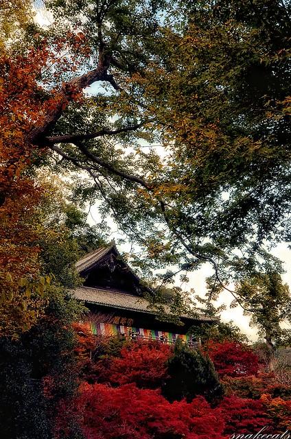 「色とりどり」 長谷寺 - 奈良