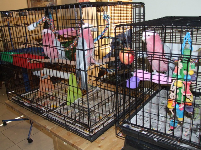 Small Collapsible Dog Crate