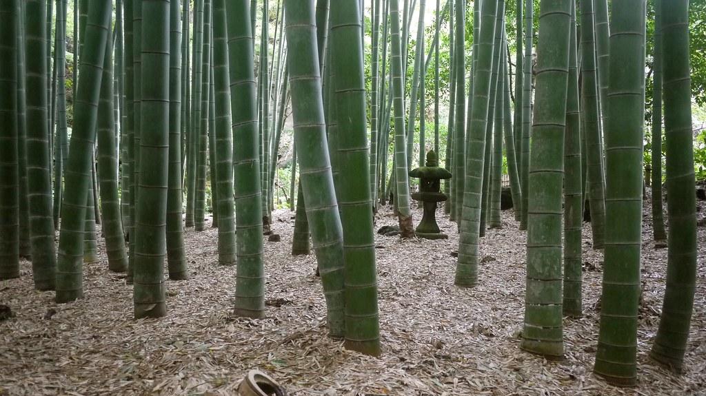Hokoku-ji Bamboo Grove