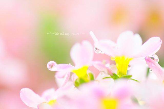 Spring will come...