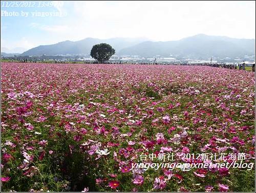 台中新社_2012新社花海節20121125_R0010592