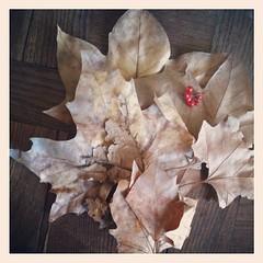 #autumn #leaf
