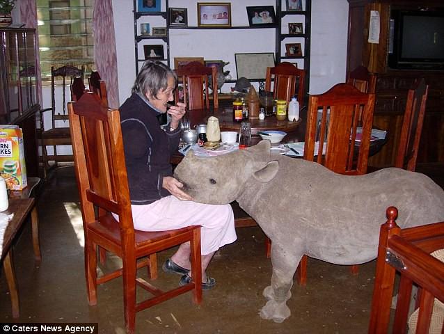 rinoceronte5-diarioecologia