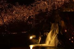 滝ライトアップ