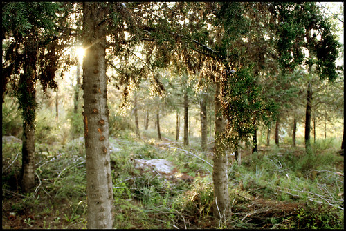 лес15