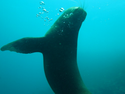 A sea lion posing for the camera in the Galapagos Islands