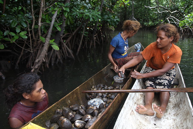 Women Removing The Shell From Mangrove Mudshells In