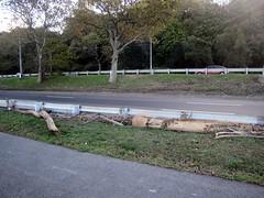 driftwood near the FDR