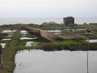 充滿兒時回憶的鷹影,為了創作素材,藝術家得每天到深山砍竹子。