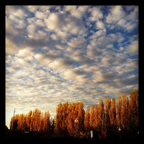 tree clouds square squareformat napa hefe iphoneography instagramapp uploaded:by=instagram foursquare:venue=4e667238227168062a3efea9