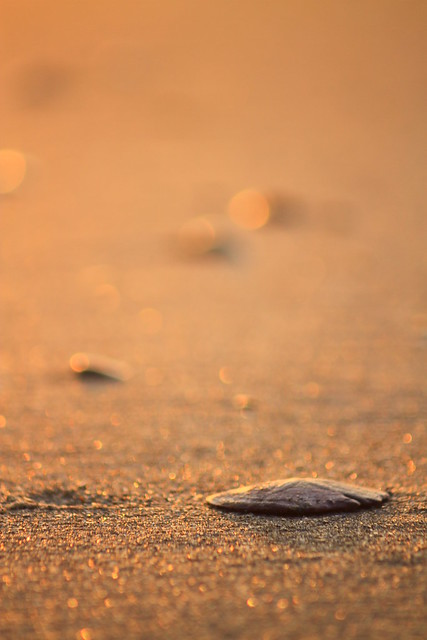 Sand Dollar, Ocracoke Sunrise