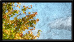 Framed modified fall branch by Julie70