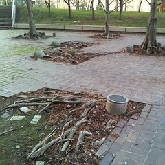 I would really like to know if the library grounds are meant to look this gnarly, or if they are just neglected.
