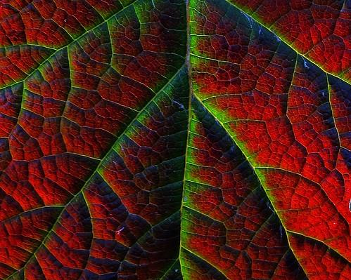 Herbstdelta by langkawi