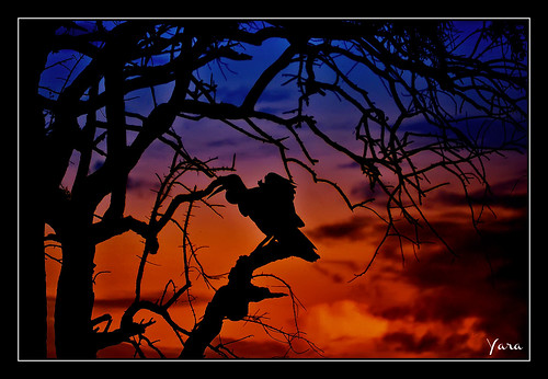 sunset naturaleza nature colors clouds atardecer colores nubes tropical silueta tropico stunningskies mygearandme flickrsfinestimages1 me2youphotographylevel2 me2youphotographylevel1