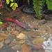 EbrightCr-Nov16-2012-E by USFWS Pacific