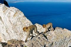 rock climbers.