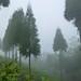 Tôt le matin dans le jardin Ilam Chiyabari, Népal