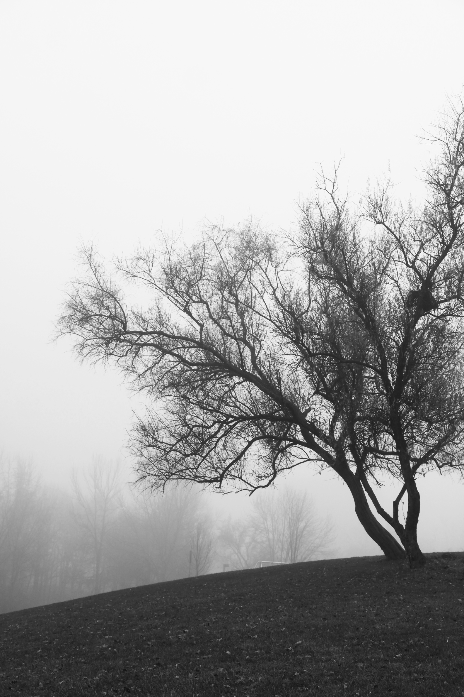 tree in fog black and white