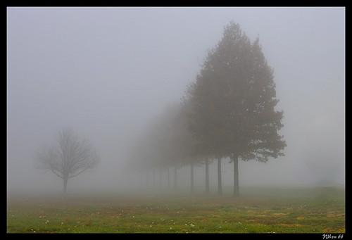 tree fog illinois nikon madisoncounty d800 platinumheartaward 70200mmf28nikkor ©copyright horeshoelakestatepark