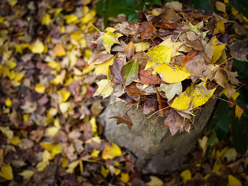 fallen leaves on the stump by hyossie
