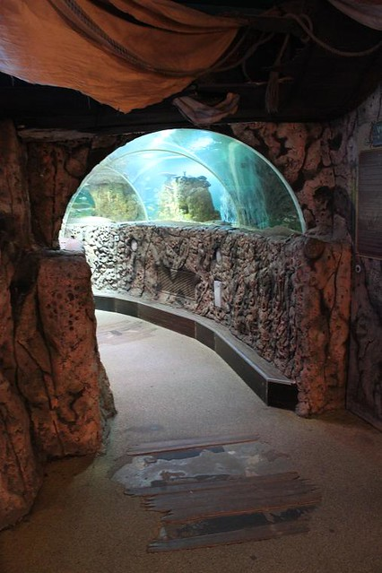 tunnel going through the aquarium