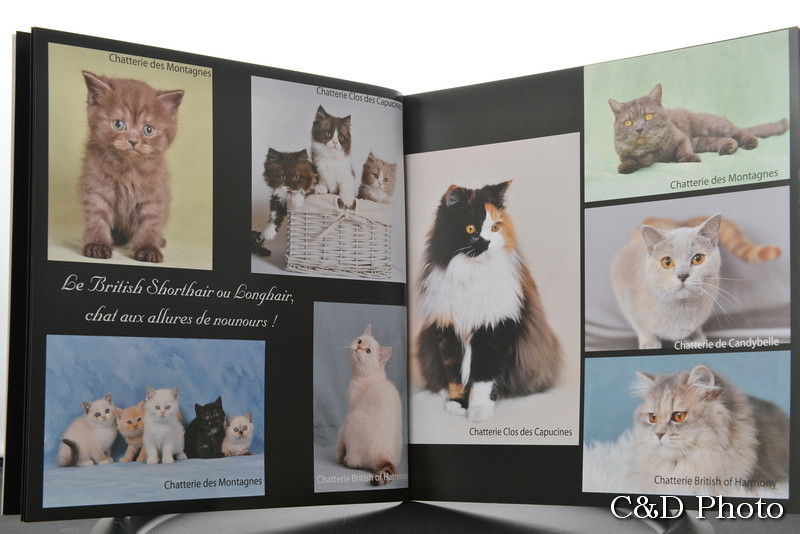 Page Chats British du livre sur les chats de race de cnd Photo