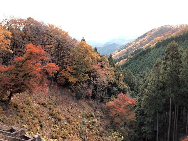 正丸峠の秋