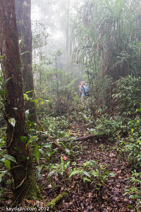 парк кинабалу, лес