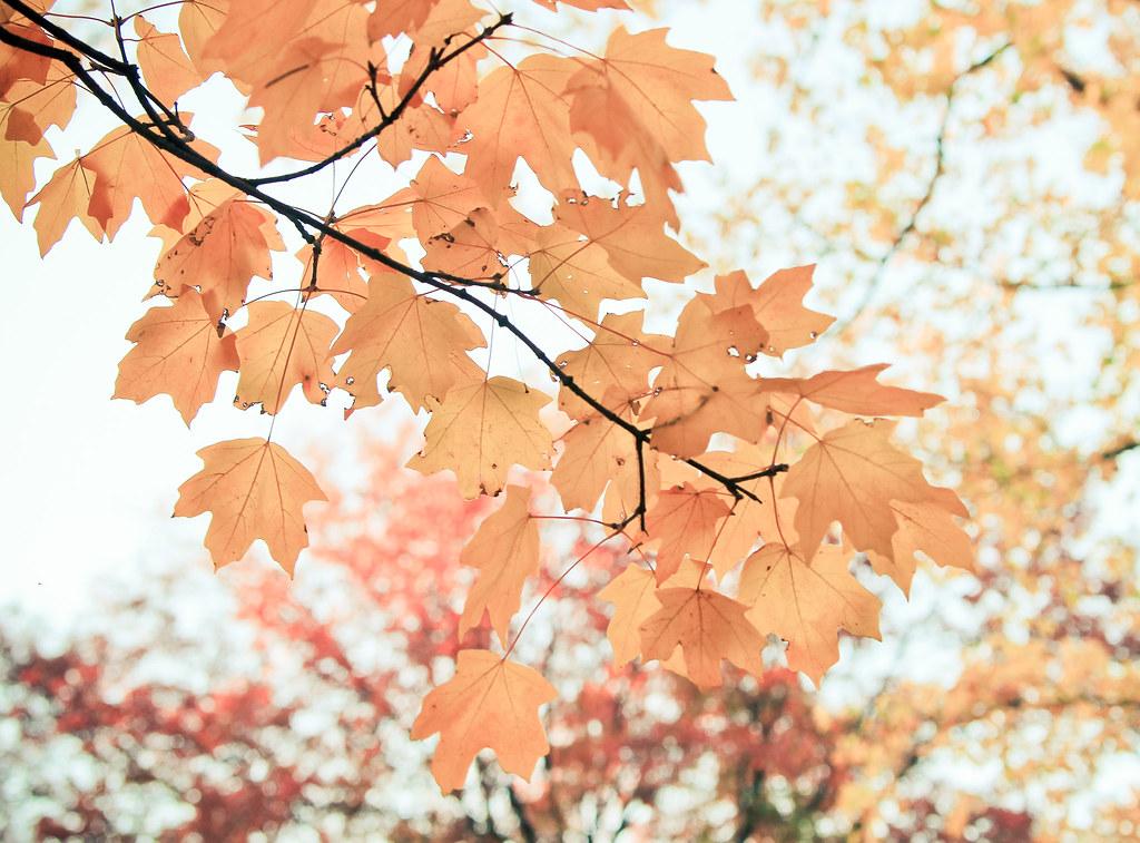 otoño {5}