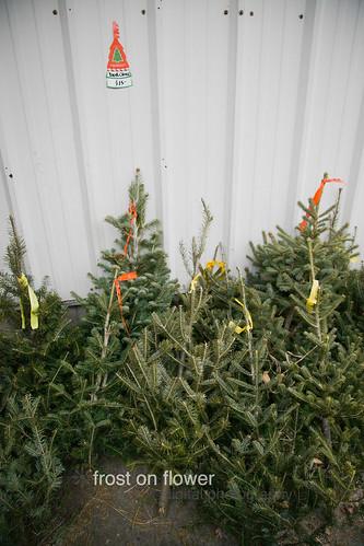 20121130-advent1-22.jpg