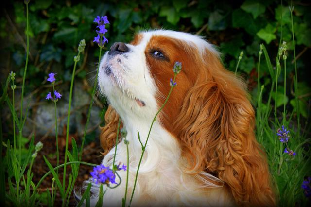 Ria enjoying Natures Finest Scents by Carol Wilkie, Scotland, UK