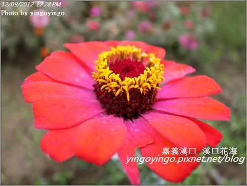 嘉義溪口_溪口花海20121209_R0010816