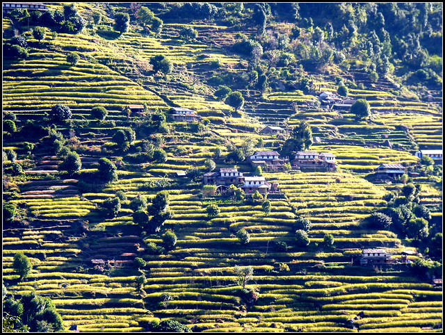 Small villages perched in the green millet field . .